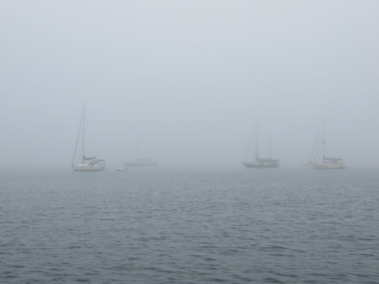 BI Salt Pond Fog