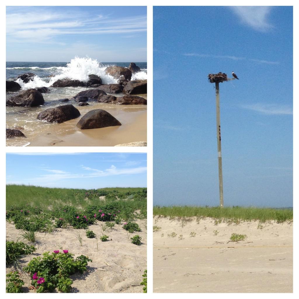 WH Beach pics