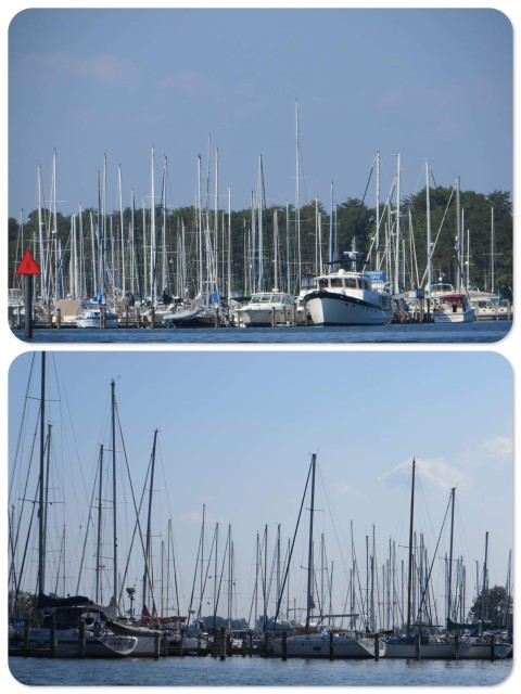 The masts of Solomons