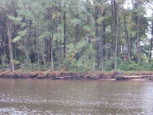 Eroding shoreline and toppling trees