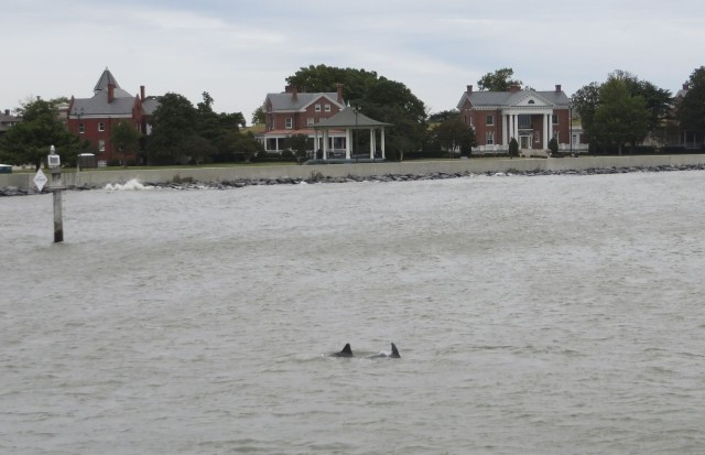 Our first dolphin sighting- gray dolphins in gray water under gray skies........