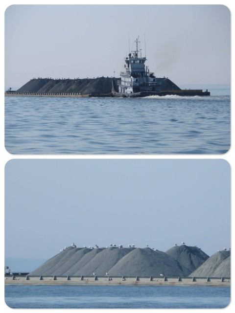 The tug is pushing a barge with piles of gravel. The seagulls are hitching a ride!