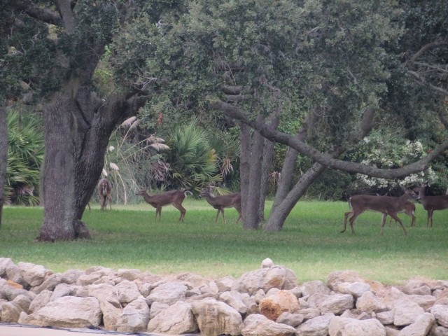 Herd of deer grazing