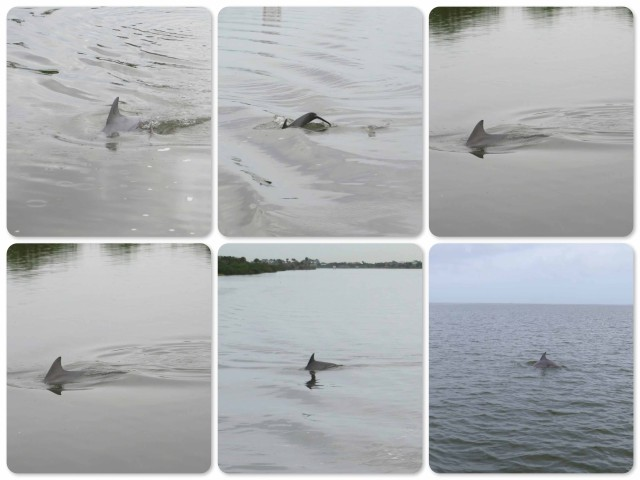 My dolphin photography attempts