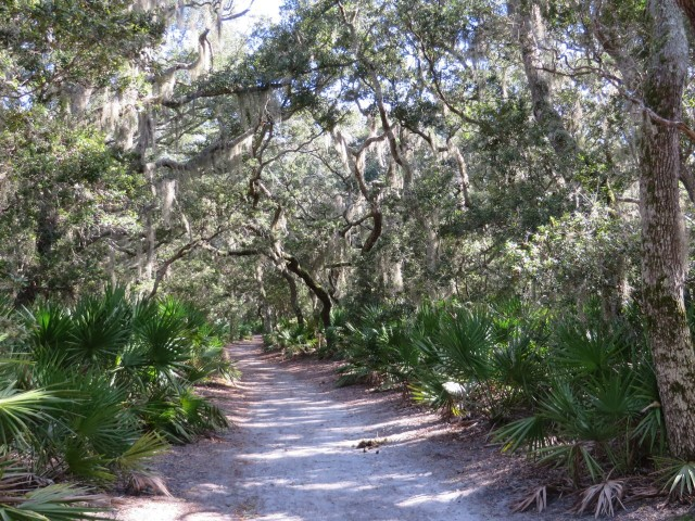 Beautiful sandy paths under our feet and Spanish moss swaying above our heads