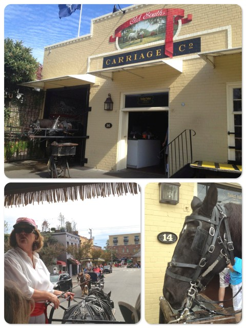 We chose Old South Carriage Tours. ~ Janice our guide was entertaining and knowledgeable. ~ Steve, our horse
