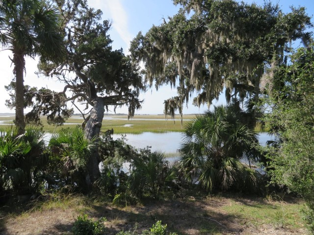 Salt marshes and Spanish moss