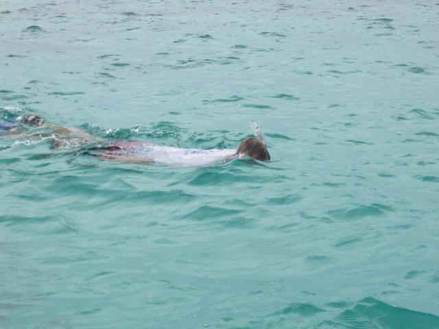 Al snorkeling around