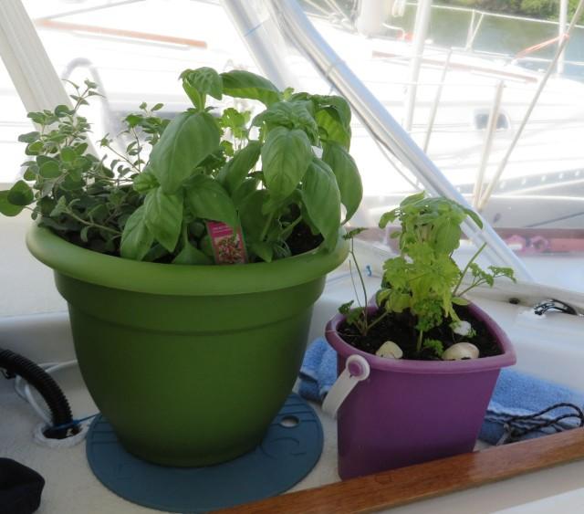 My fresh herb garden