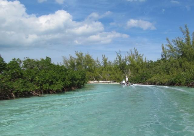 Heading into the mangrove sluice