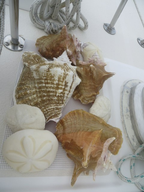Conch shells and sea biscuits sitting out to try next to the mast