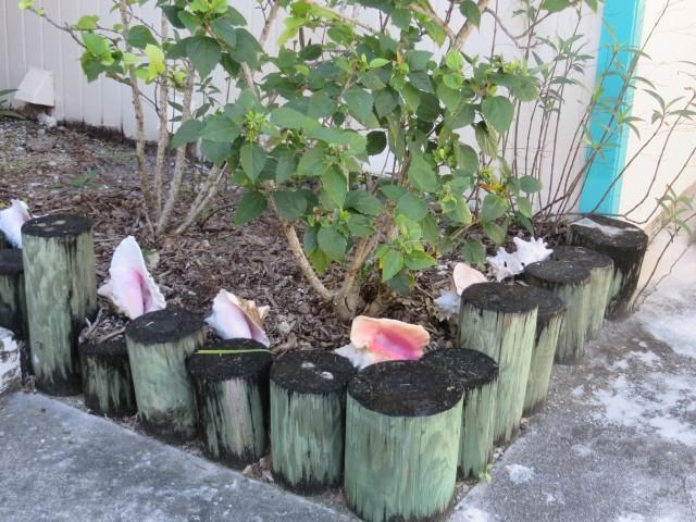 Conch shells lining a garden
