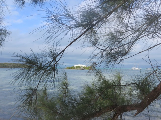 A peak through the pine trees to see the little island that greets you upon entering the Hope Town harbor.