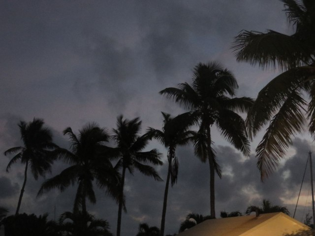 Silhouettes of palms