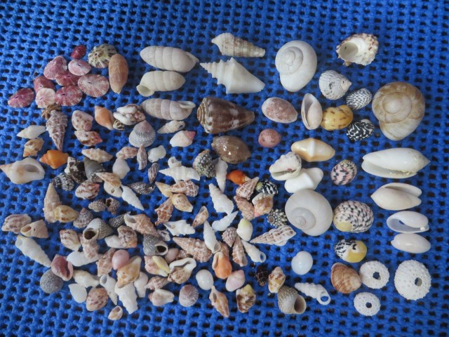 Teeny tiny sea shells