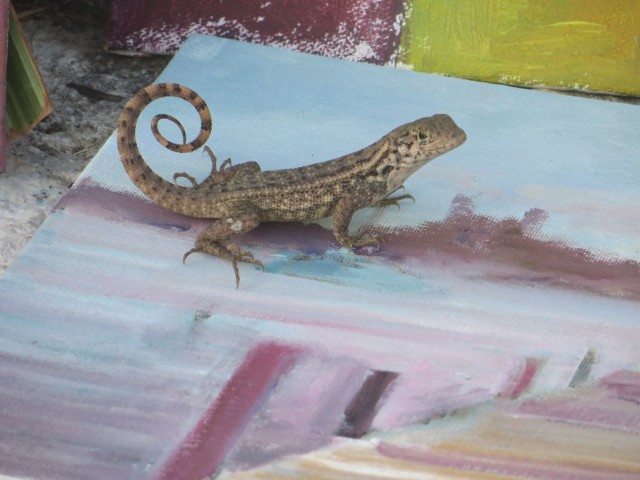 This little curly tail lizard enjoyed this painting very much!