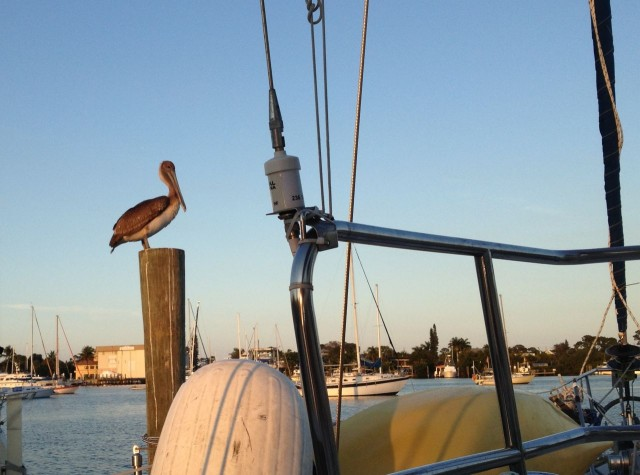 Our pelican friend greeted us as we pulled ingot he dock.