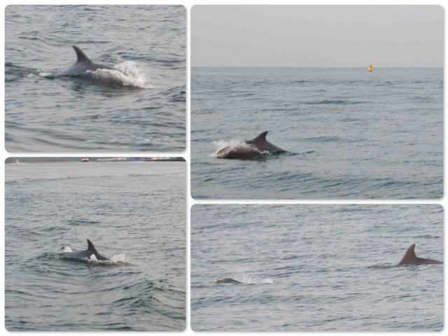 Dolphins escorted us out of the channel and into the ocean.