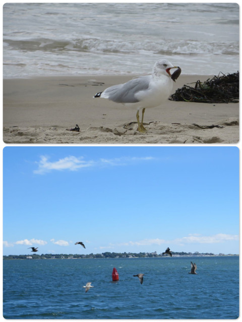 Watching the sea gulls' antics on the beach and on the water.