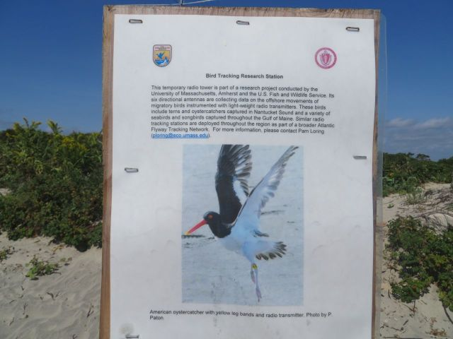 Description of the bird tracking station