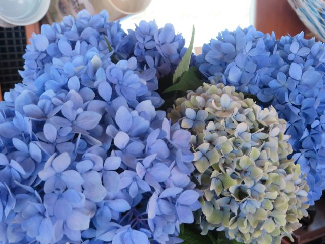 My vase of hydrangeas stayed fresh and pretty for the entire week.