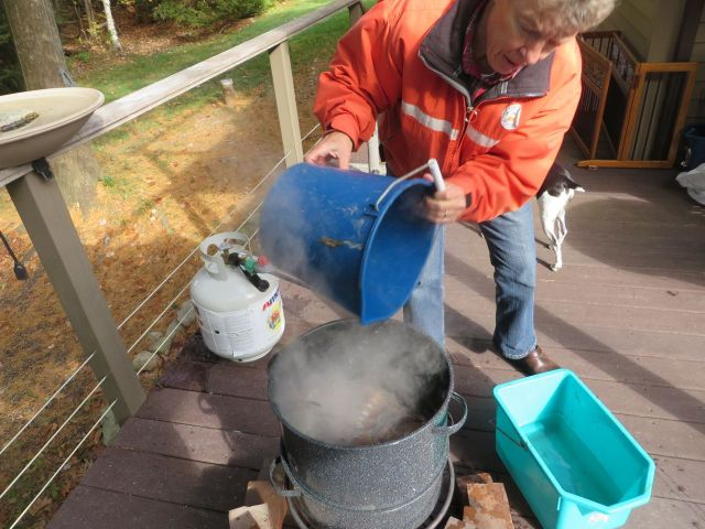 Laurie prepares the steaming pot and adds the lobsters.
