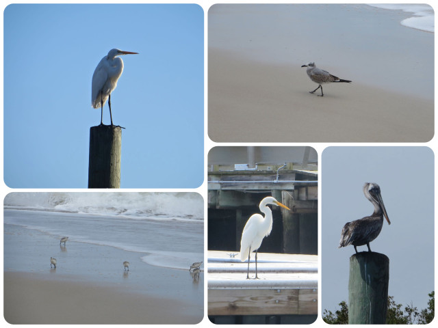 More birds to watch, on pilings, the docks, and on the beach.