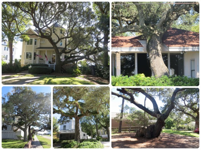 The twists and turns of Southern Live Oaks. In Southport, even the homes change to accommodate the trees -- take a close look at the upper right photo.