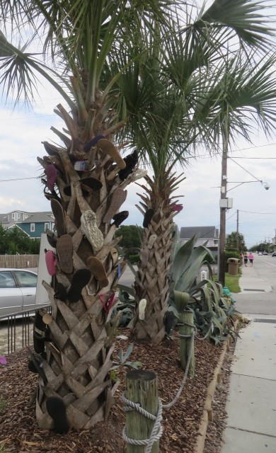 Shoes hanging on a palm tree outside of a bar. Any thoughts on why? Must be a local tradition of some sort.