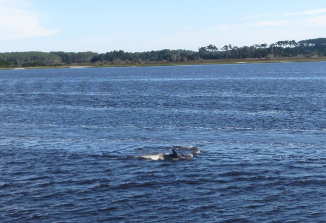 Dolphins! It still surprises us to see dolphins in inland waterways. And it never bores us.