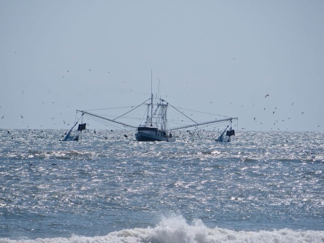 "Dragger with his nets out, and fish following. The original ""trawler."""