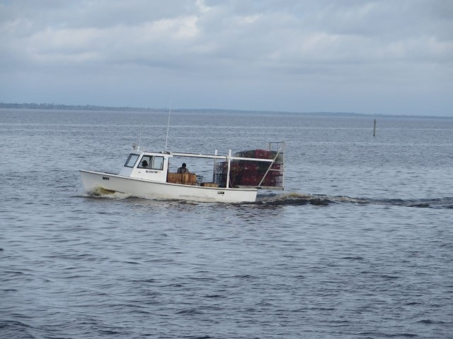 A little shrimper in the Alligator River.