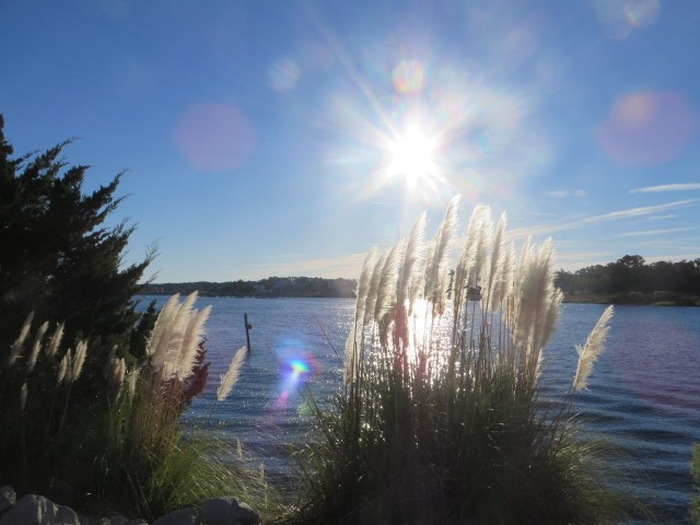 morning sun on grasses ICW