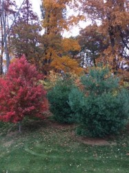 There was still some color left in the trees behind our house.