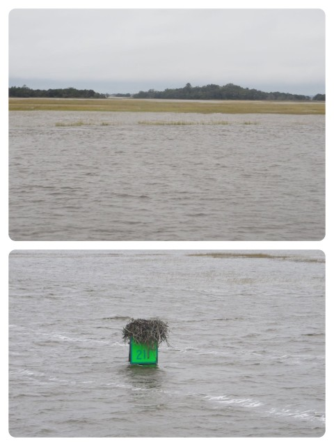 The waters were very high, from the high tide made higher by the full moon and the recent flooding in South Carolina. The edge of the ICW was difficult to determine - see how the marsh grasses barely show above the water line? And this green marker was almost under water.