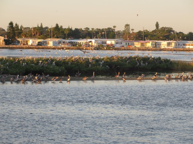 This little spit of land extended some distance and was covered in pelicans.