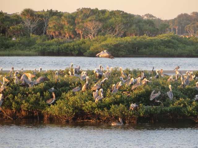 A closer look at the pelicans on that spit of land.