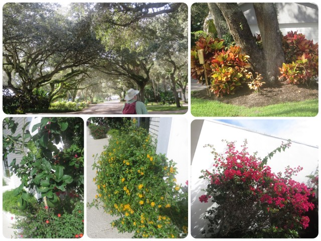 Florida is covered in beautiful trees, shrubs, and flowers. When riding the bikes we deliberately take the roads through neighborhoods.