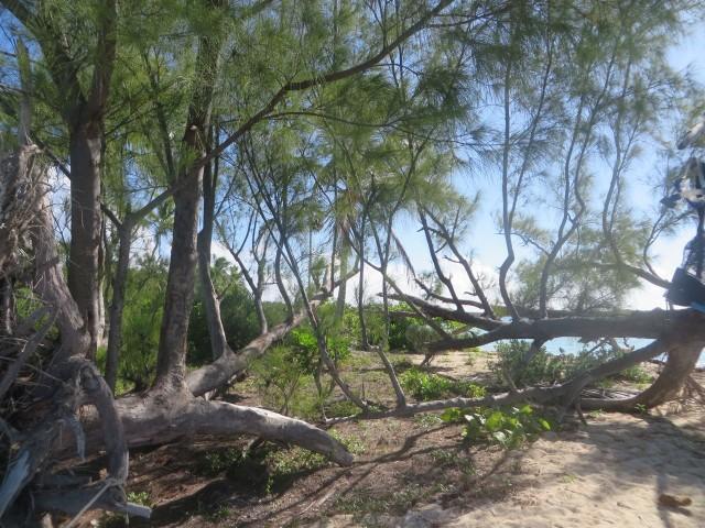 Tahiti Beach 13