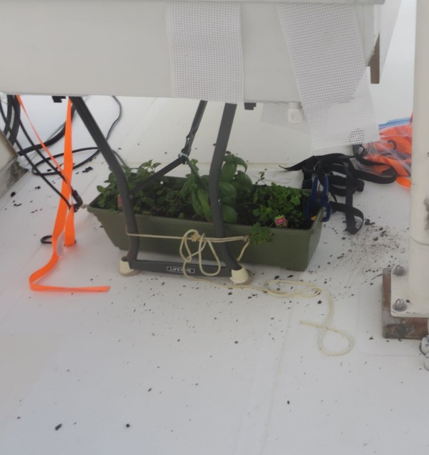 My herb plants were tied down under the solar panels on the flybridge.