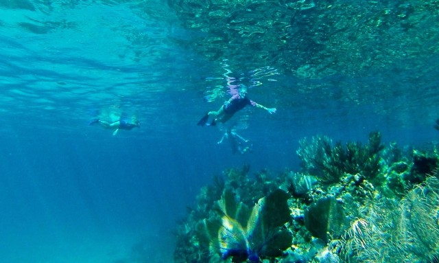 Snorkeling around the reef