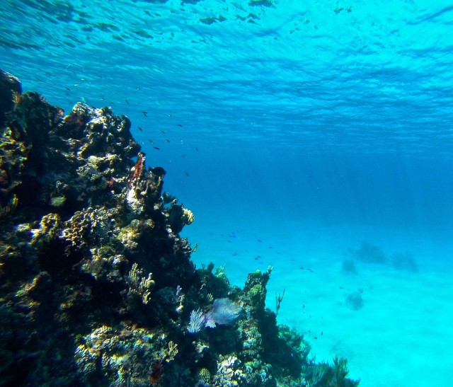 Edge of the reef