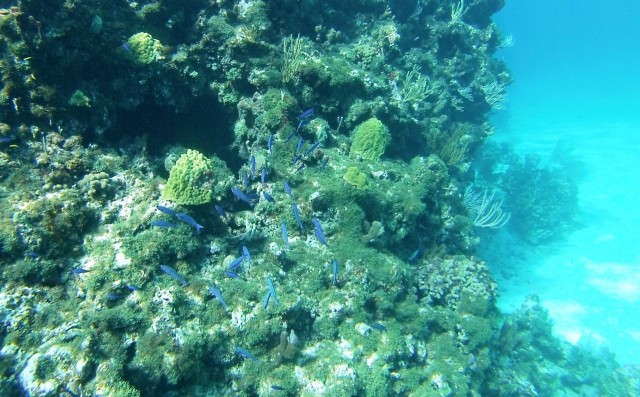A school of little blue fishes swimming by.