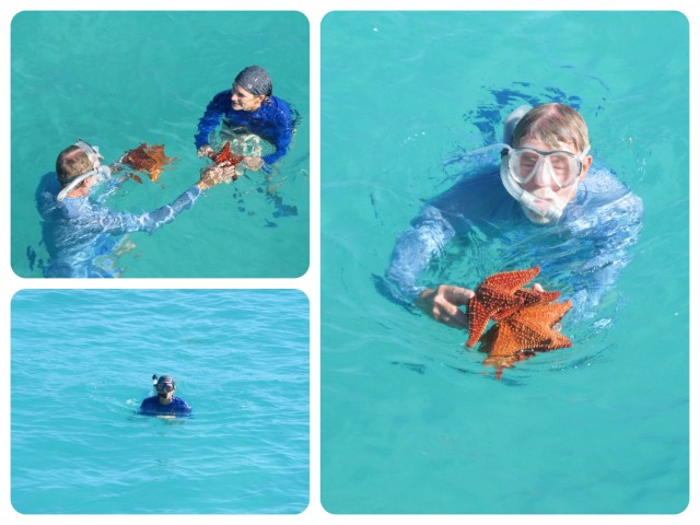 Al found several starfish and brought them the surface for me to see.