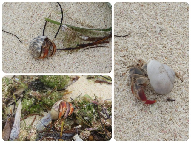 Three little hermit crabs