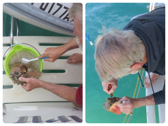 After acquiring the shells, they require cleaning which starts with a bath in bleach water complete with vigorous scrubbing. Tow of them had some conch bits left inside. Al had to pry and pick them out so they didn't stink up the boat. He's really pretty indulgent about my obsessions. ;-)