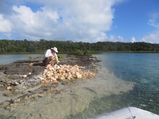 I talked Al into dinghying close enough to climb onto the rocky little island and pick out a few shells.