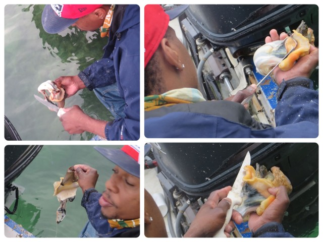 cleaning conch