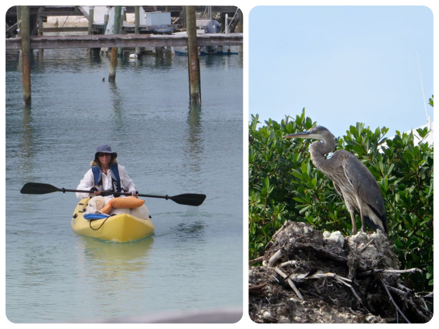 Other interesting sightings of domestic and wild life here at Little Harbour. Notice that the dog in the kayak is wearing a people life vest. Blue heron?