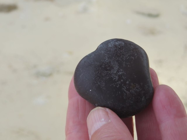 Al walked down along the water's edge and found another sea bean. This one is a heart-shaped sea heart.